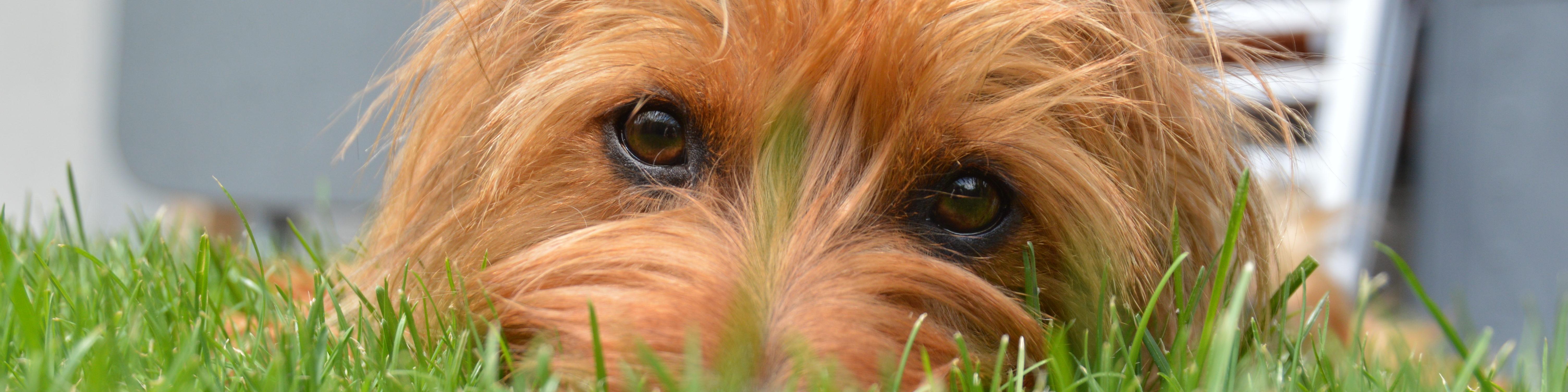 Hundecoaching