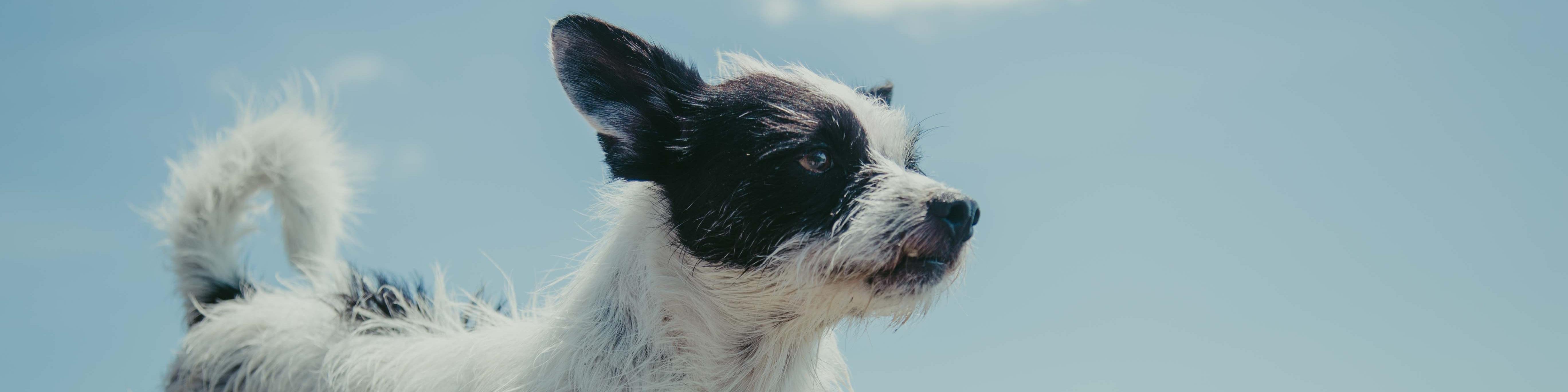 Hundeschule kleiner Hund